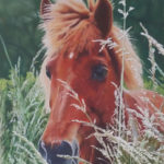 Pastellbild von Eva Jelinek: Islaenderin