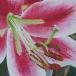 Pastellbild von Eva Jelinek: Lilie