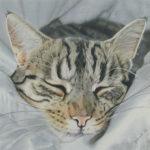 Pastellbild von Eva Jelinek: Glück - eine offene Schlafzimmertür