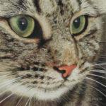 Pastellbild von Eva Jelinek: Tigerkatzi